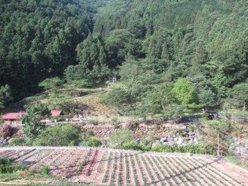 県道から見る夢の森公園キャンプ場