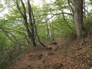 出雲峠への登山道