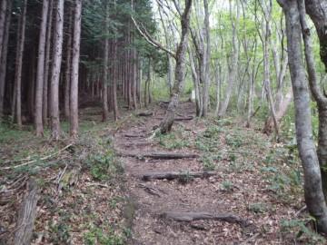 ききょうが丘への道