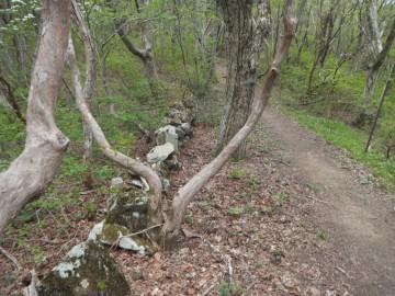 毛無山-伊良谷山間の登山道横には石塁みたいなのがあります