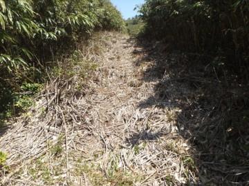 縦走路はかなりの部分がこんな道です。