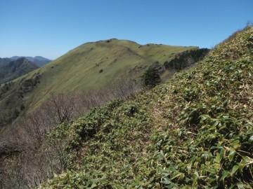 笹ヶ峰に向けての縦走路のひどい所。これはまだマシな方です。
