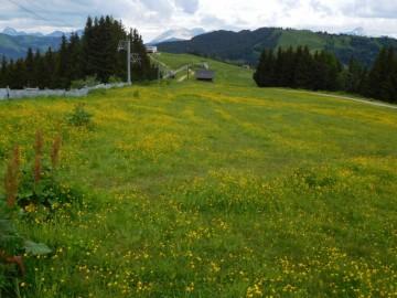 ベルビューまでは、花が咲き乱れる高原