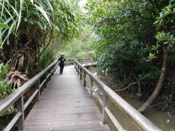 慶佐次湾のヒルギ林の中に延びる木道