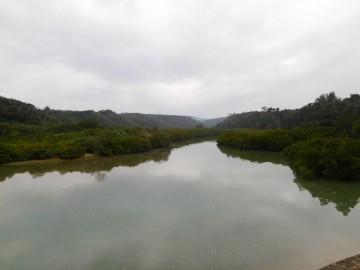 慶佐次湾のヒルギ林