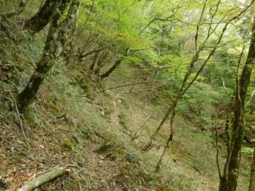 八面山の巻き道