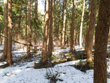 森の中を蛇ヶ乢に向けて進みます