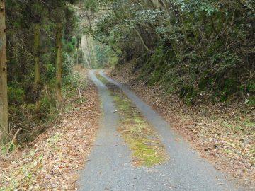 天神山に向けての道