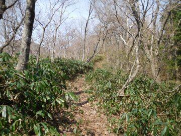 縦走路的な登山道