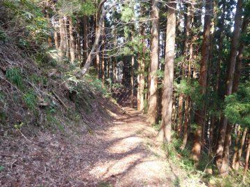 安蔵峠から林道へ向けての道