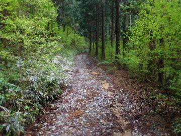 林道を進んでいきます
