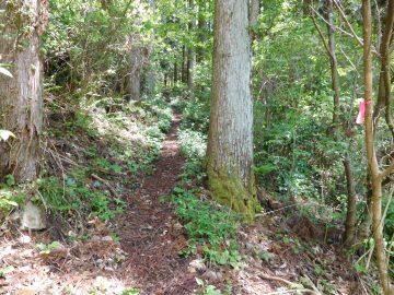 森の中を急登で登ります。