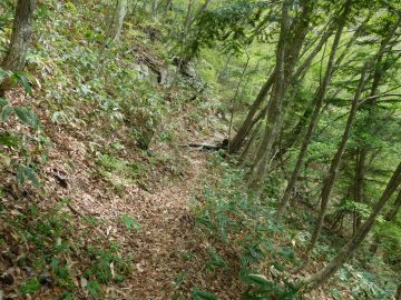 比較的平坦な登山道