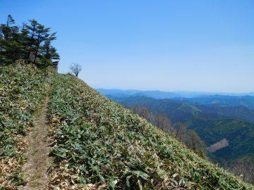 南側の景色がとてもいい登山道