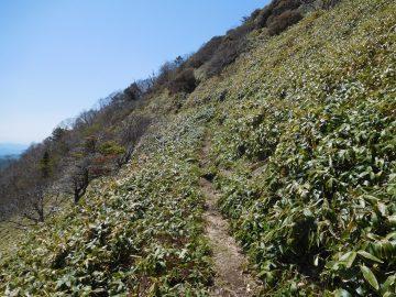 筒上山手前の登山道