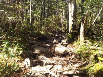 恵那山山頂が近くなった地点の登山道