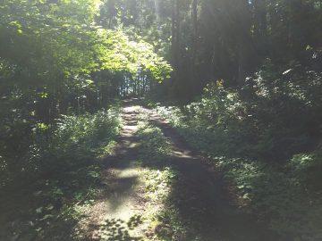 登山口に向かう道