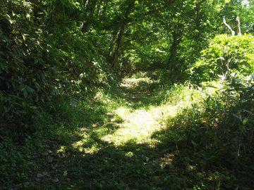 牧場の作業道だった道をゆるやかに上っていきます