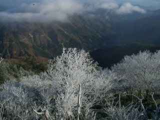 剣山頂上ヒュッテ前の霧氷