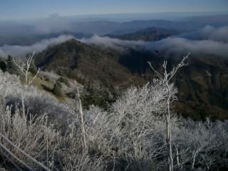 剣山の霧氷